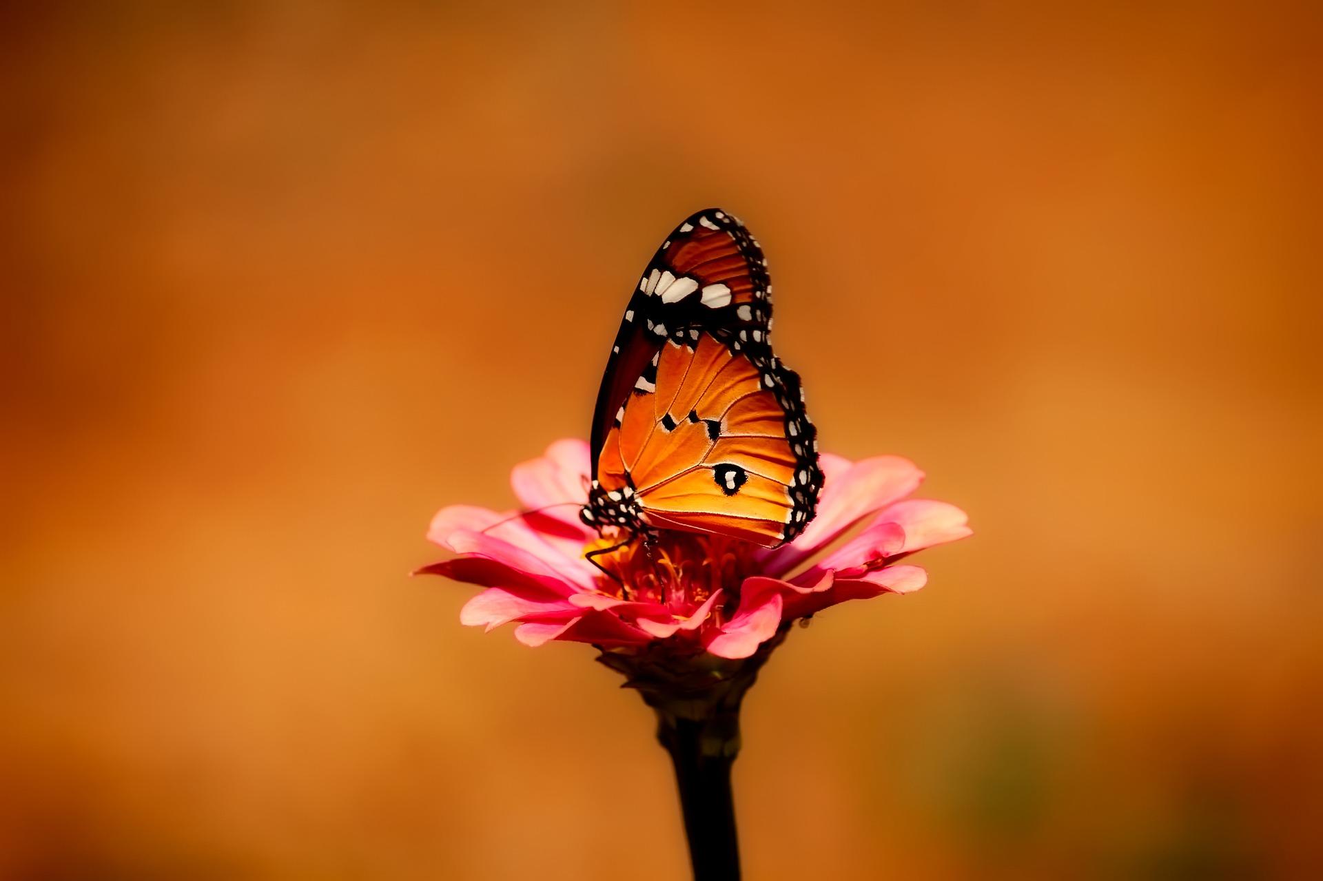 butterfly-2656624_1920